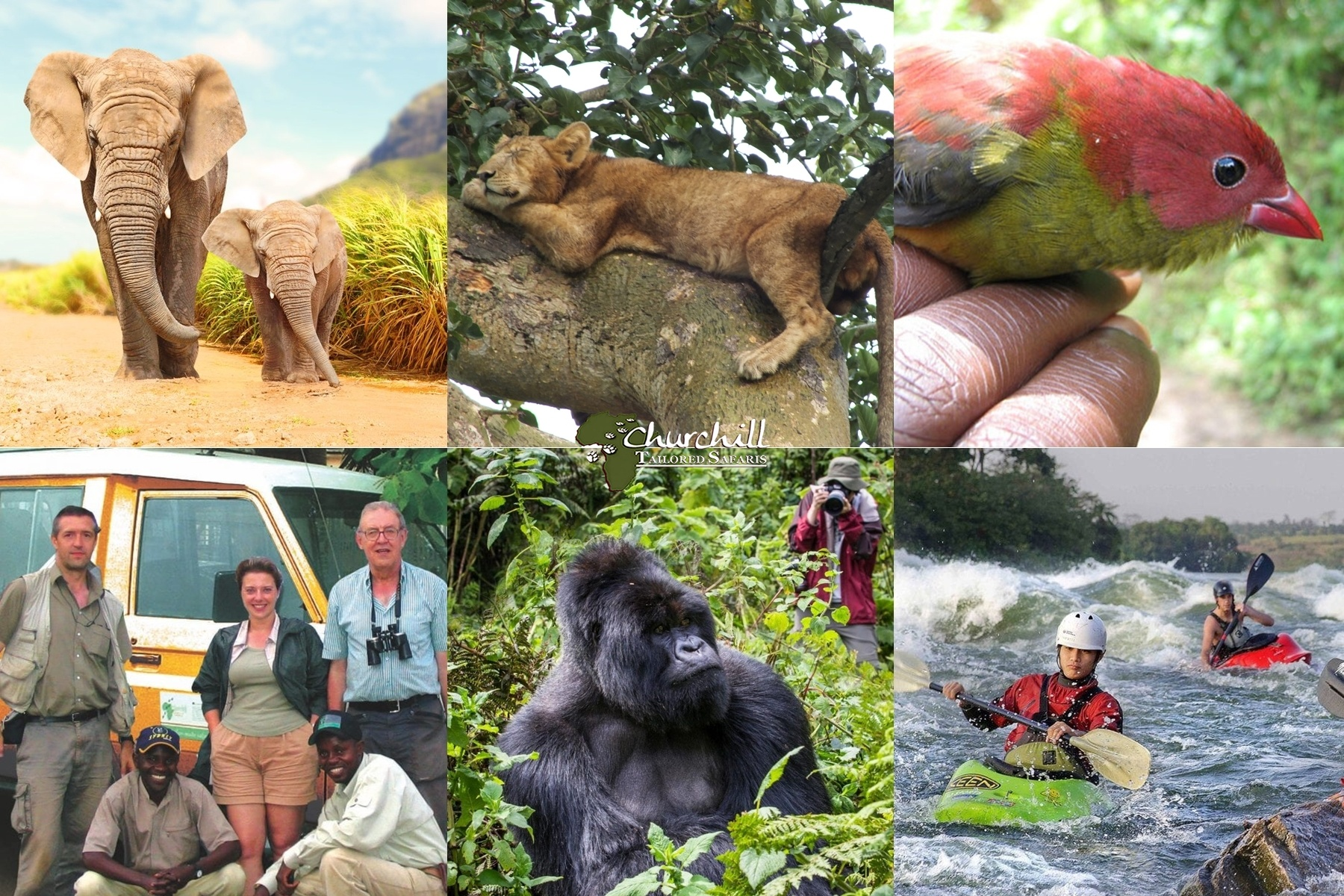 , Safari Packages