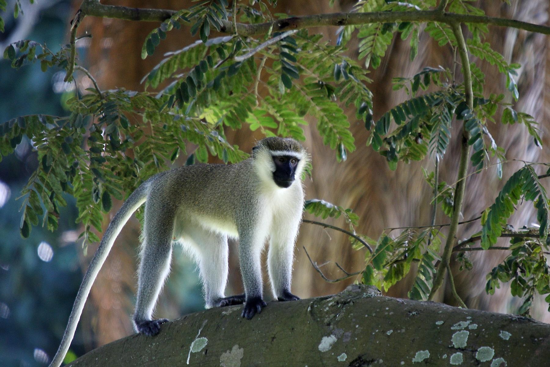 , Rwanda
