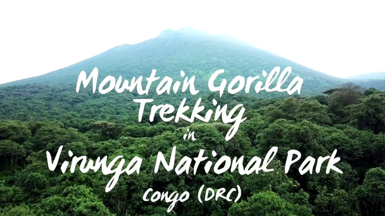 Mountain Gorilla Trekking In Virunga National Park, Congo DRC | 2018